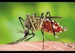 Zika Virus Prevention - Health Council
