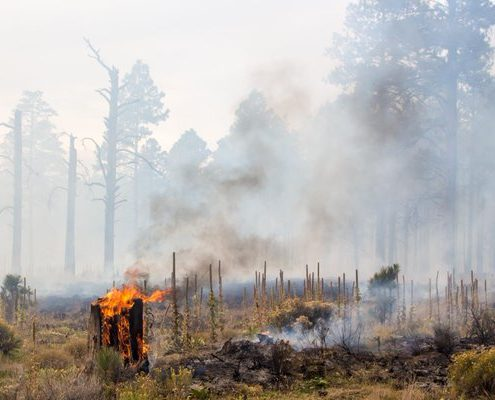 Longer Fire Season Heightens Air Quality-Related Health Concerns - Health Council