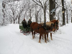 horse drawn sleigh in winter