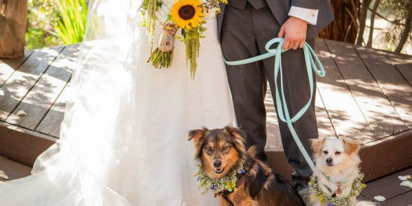 Wedding Favors Dog Lovers