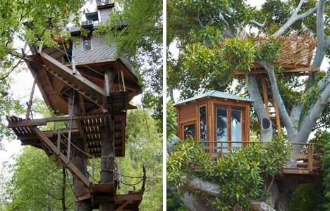 Trend Home Building Ideas With Tree House Modern Building