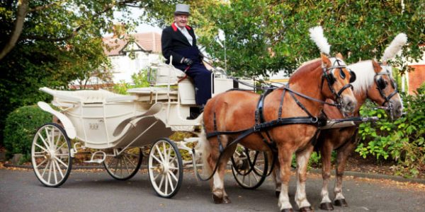 Brown Wedding Horse and Carriage