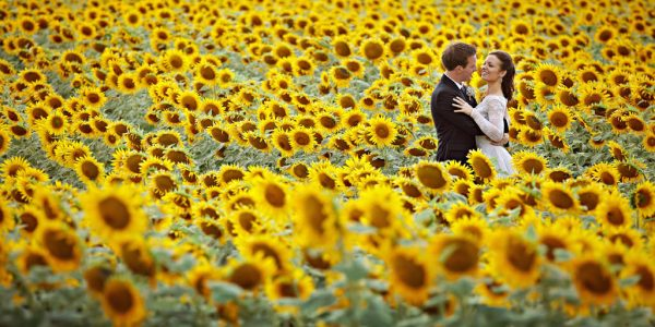 So, if you happen to be getting married near a sunflower field and if you could possibly convince your photographer to help you create your own version of this breathtaking photo