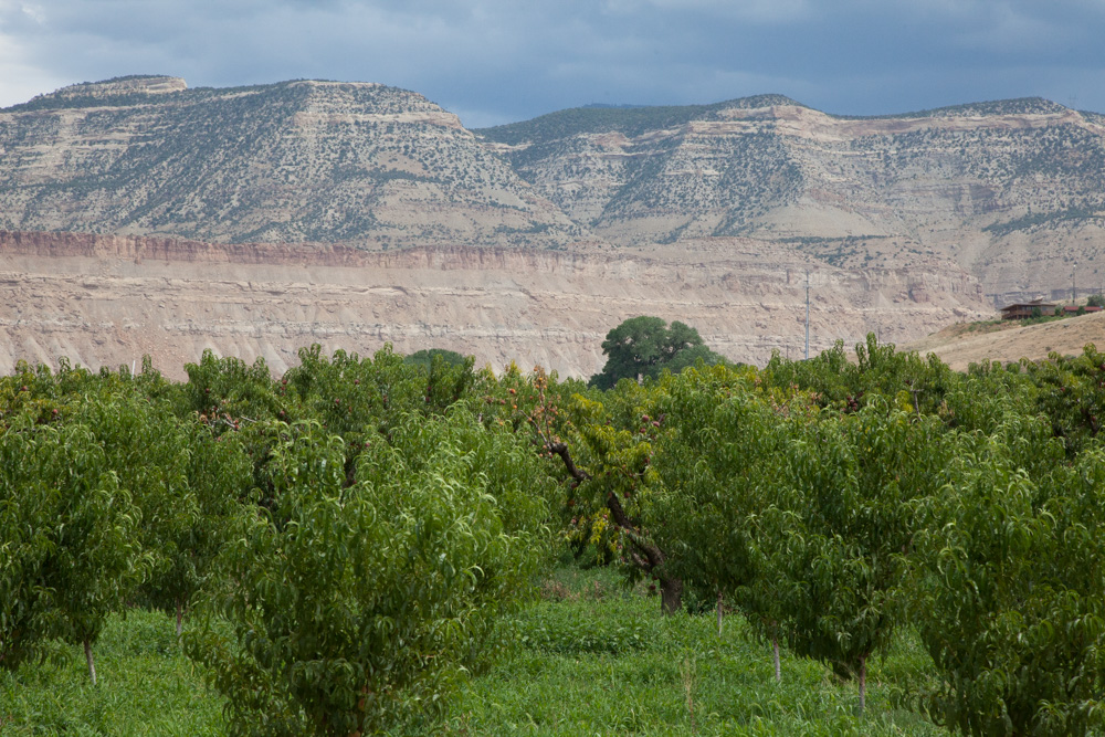 Palisade/Paonia/Grand Junction Colorado