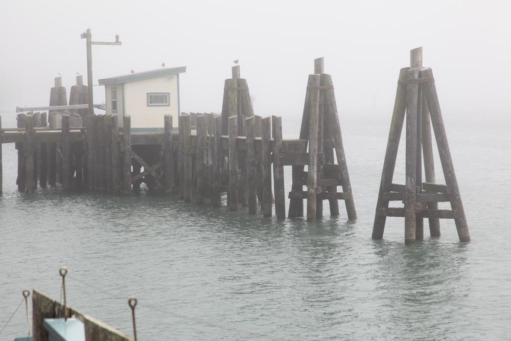Bodega Bay/Bodega California