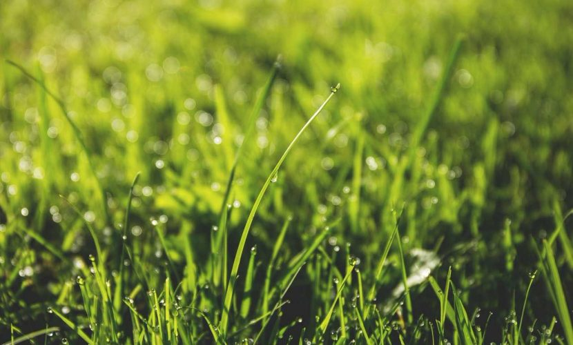 Aerating Your Lawn: How Often And When You Should Do It