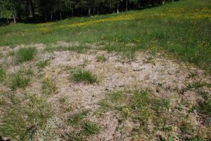 What Is Snow Mold And How Do I Get Rid Of It?