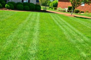 Lawn Care Experts Cite The Benefits Of Verticutting
