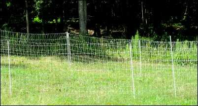 chickens net fence