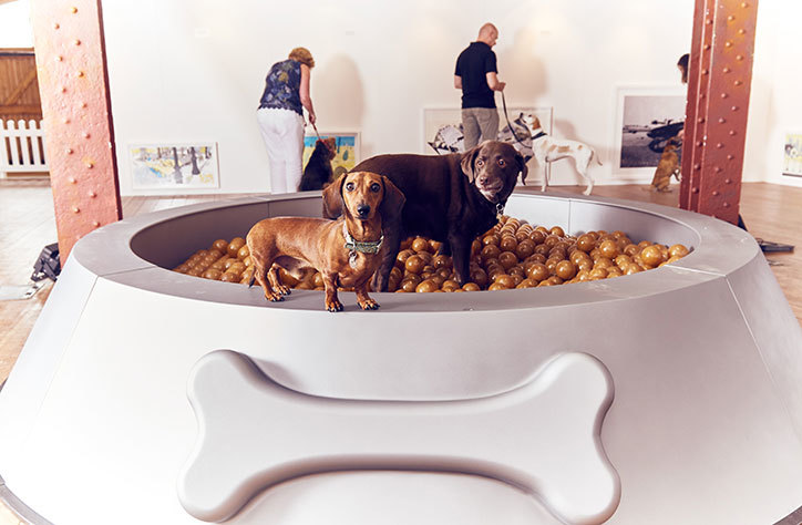 Dominic-Wilcox-art-for-dogs-exhibition2