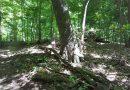 Tree Farm Novi, MI