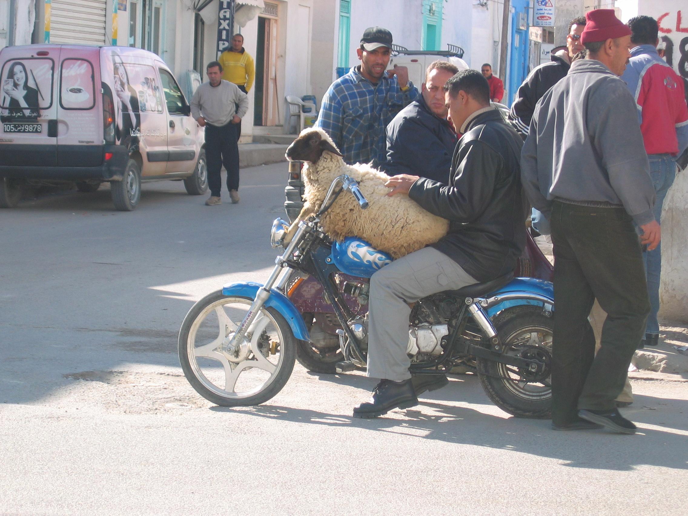 Tunisia – Douz Sahara Festival