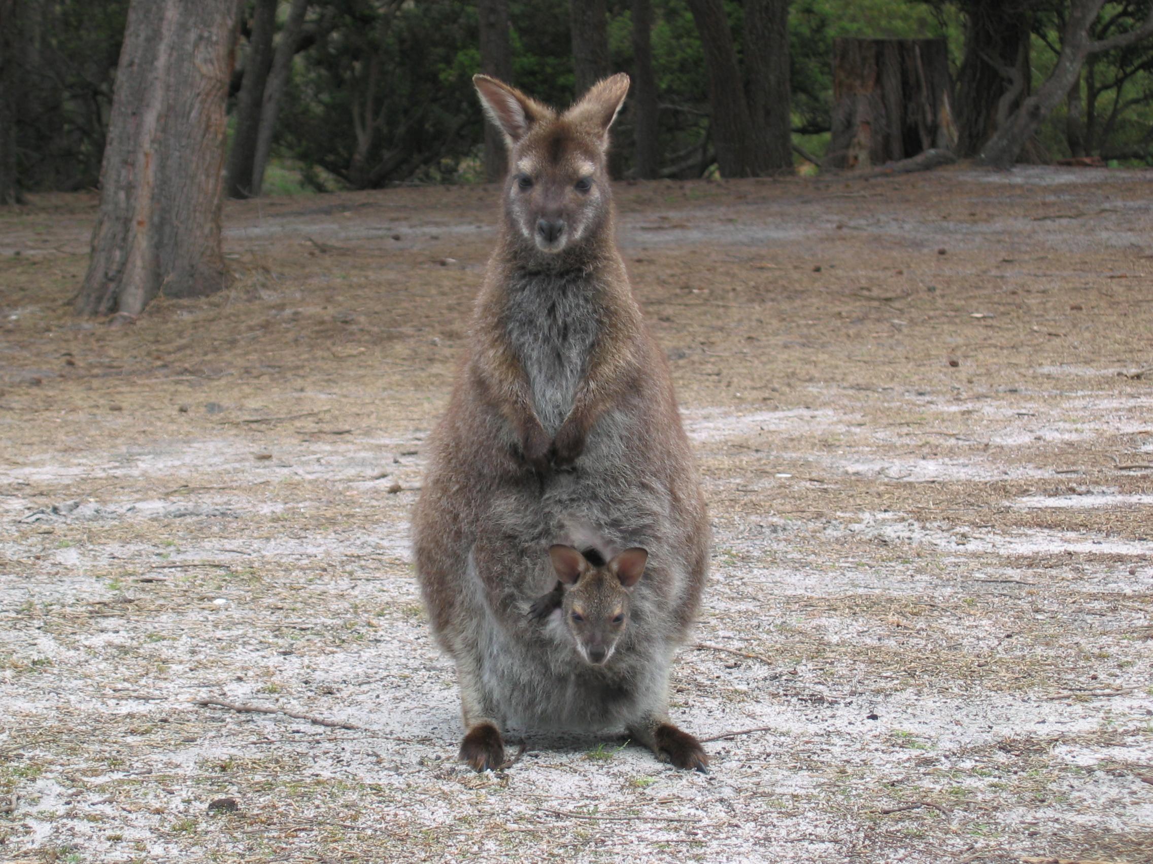 Australia – Tasmania & Perth