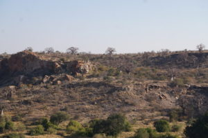 Mapungubwe Landscape