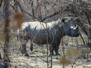 Matobo Rhino Tracking