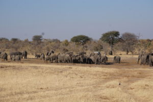 Elephant Crowd