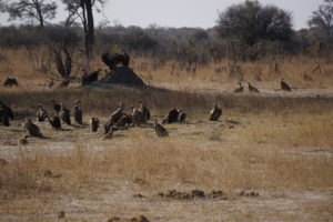 Murder of Vultures