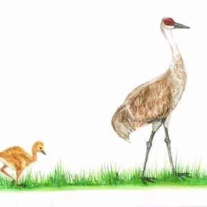 Amy wilmington cranes