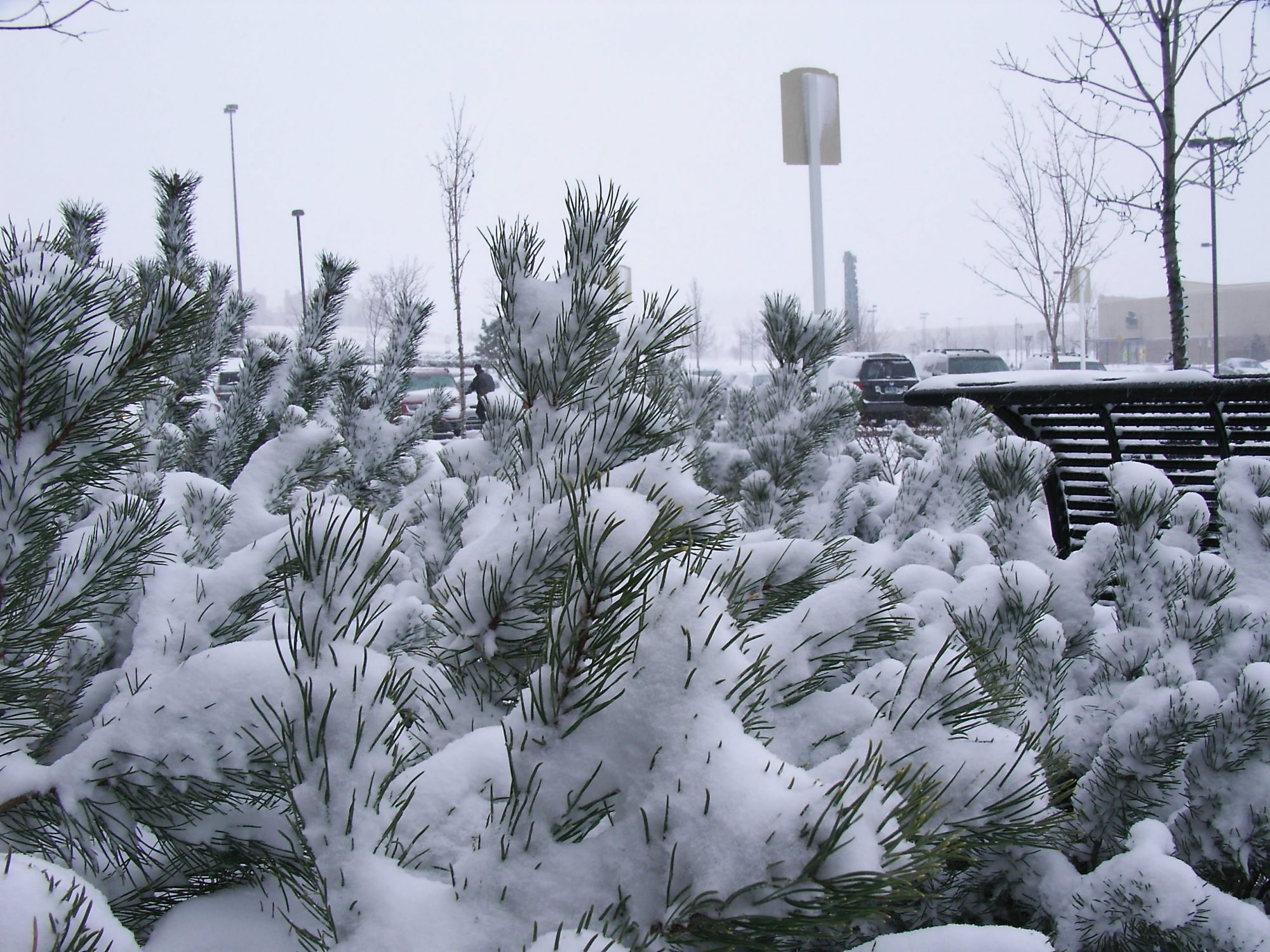 3 Simple Ways You Can Use To Protect Your Trees And Shrubs From The Winter
