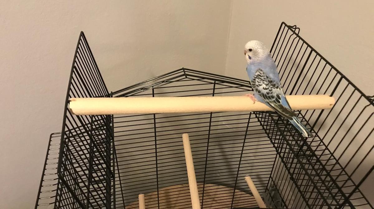 Vogelkooi In Huis : Vogelkooi jeroenhubert