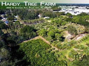 hardy tree farm aerial