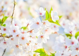 Don't let spring allergies bring you down! - Health Council