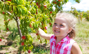 Orchard and Farm - Girl Picking Apples