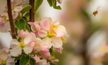 Bees & Blossoms Spring Celebration