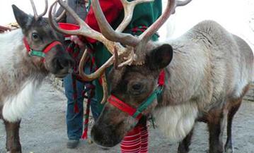 Mrs. Claus & The Littlest Reindeer