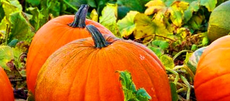 Fall Season - Pumpkins