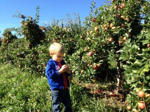 Apple Holler's Farm Tours boy in apple orchard