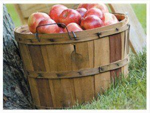Apples in basket - bushel