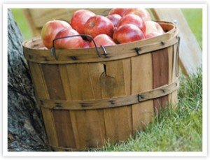 Apple Holler's Bushel of You Pick Apples