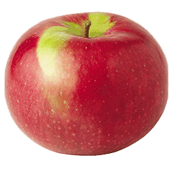 Apple Holler McIntosh Apple