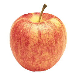 Apple Holler Gala Apple