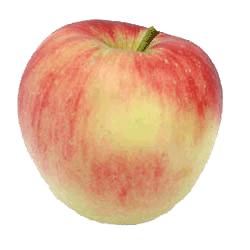 Apple Holler Autumn Crisp Apple