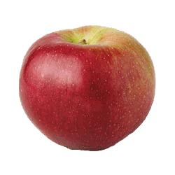 Apple Holler Macoun Apple