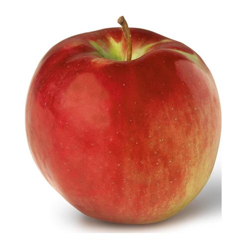 Apple Holler Cortland Apple