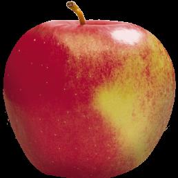 Apple Holler Snow Sweet Apple