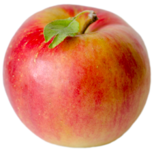 Apple Holler Sansa Apple
