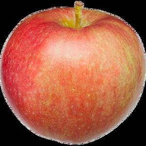 Apple Holler Paula Red Apple
