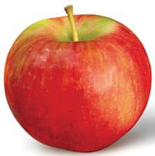 Apple Holler Zestar Apple
