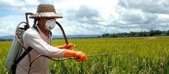 Exposição a pesticidas pode aumentar o risco de esclerose lateral amiotrófica