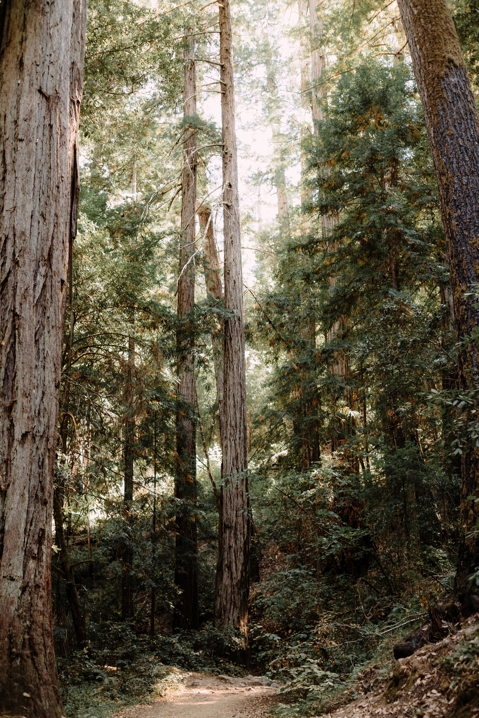 redwood-forest-elopement-0001