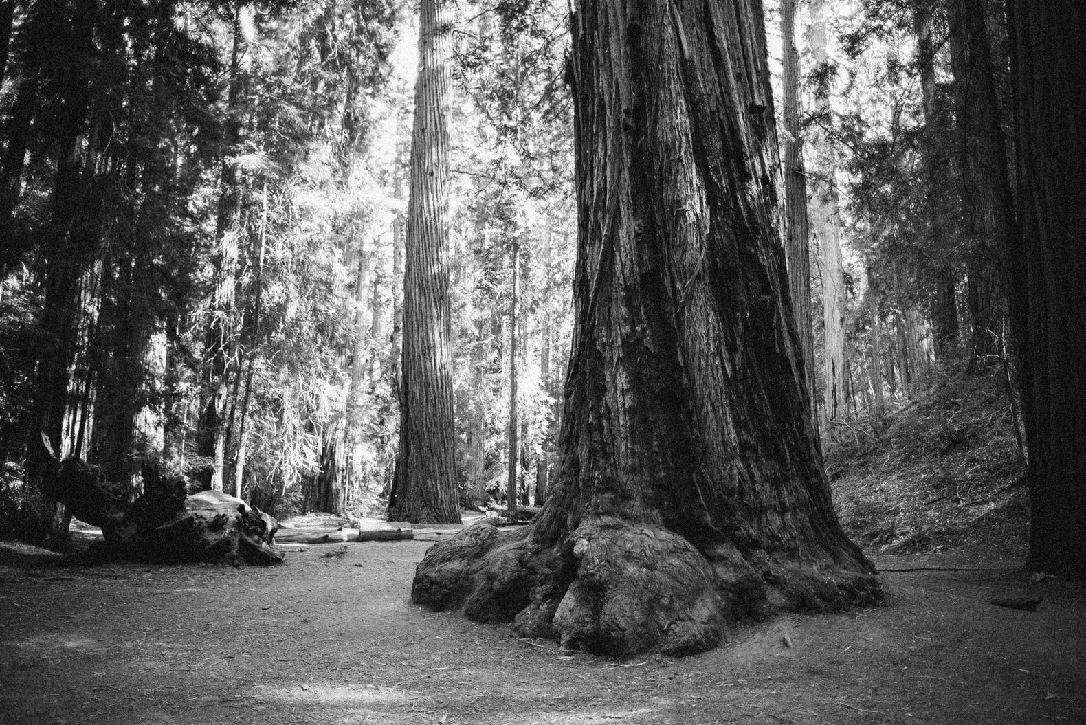 redwood-forest-elopement-0004