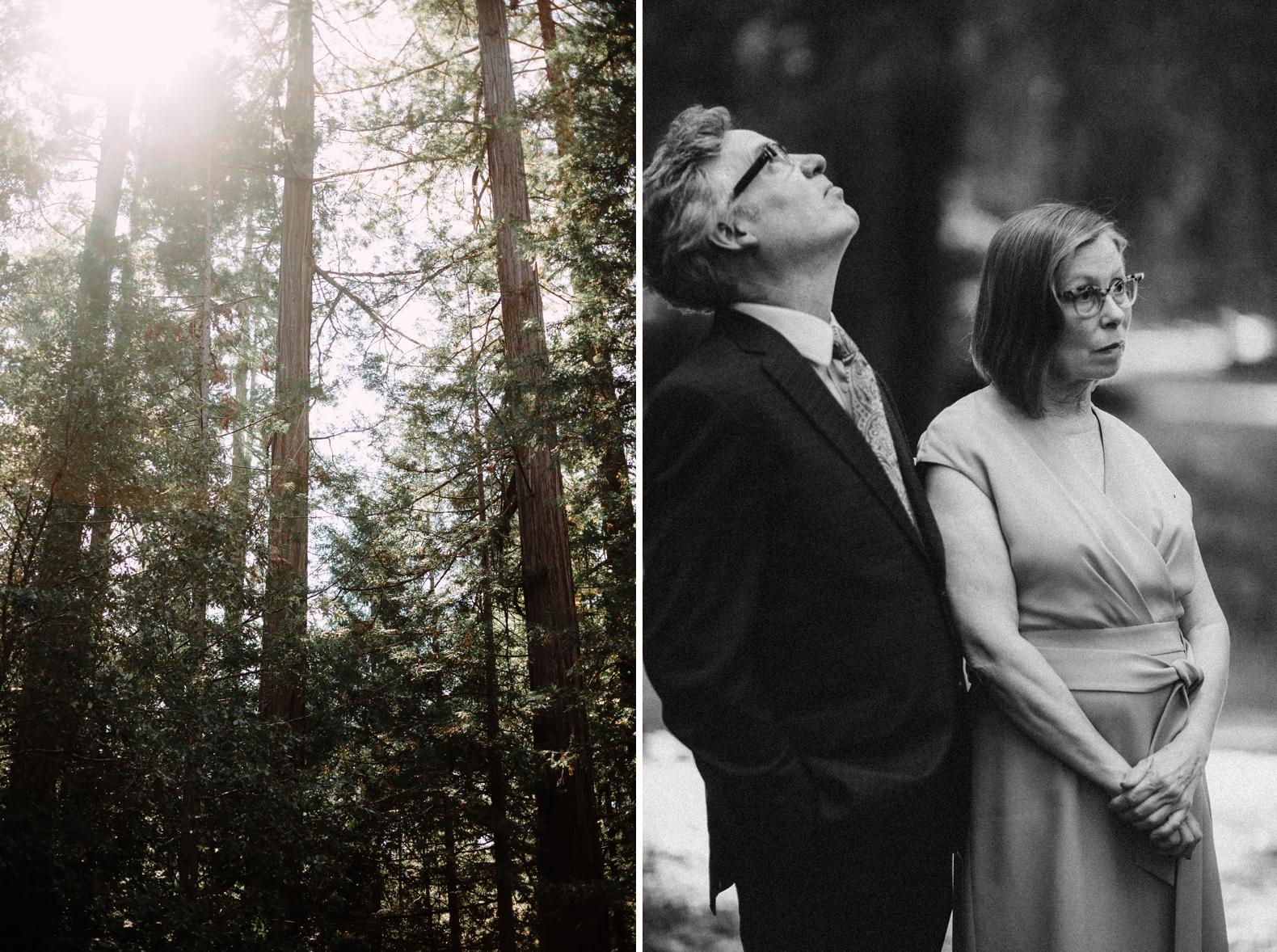 redwood-forest-elopement-0019