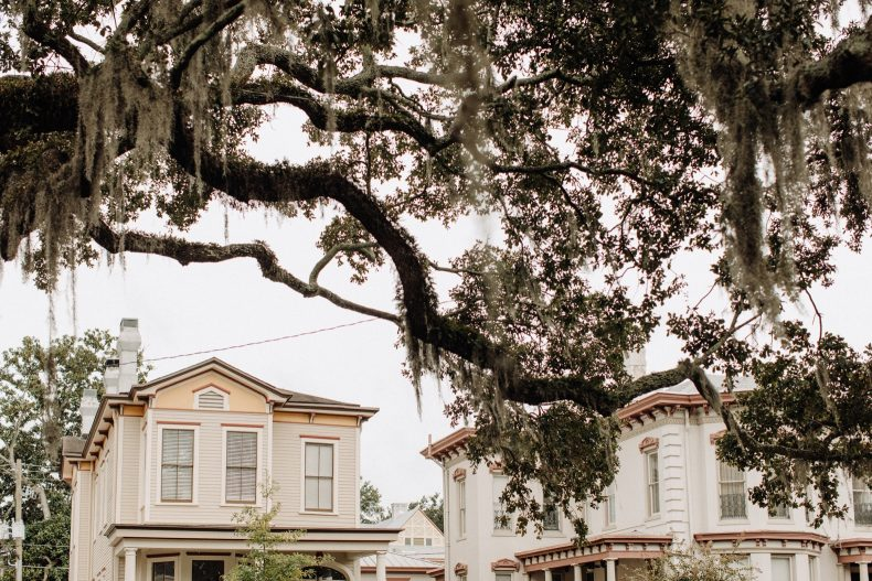 mossy oak trees above historic savannah homes