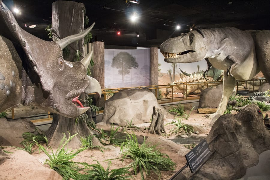 Las Vegas Natural History Museum, another museum to visit