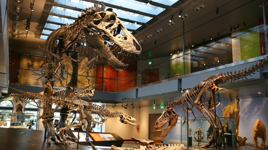 Natural History Museum of Los Angeles, something to visit in LA