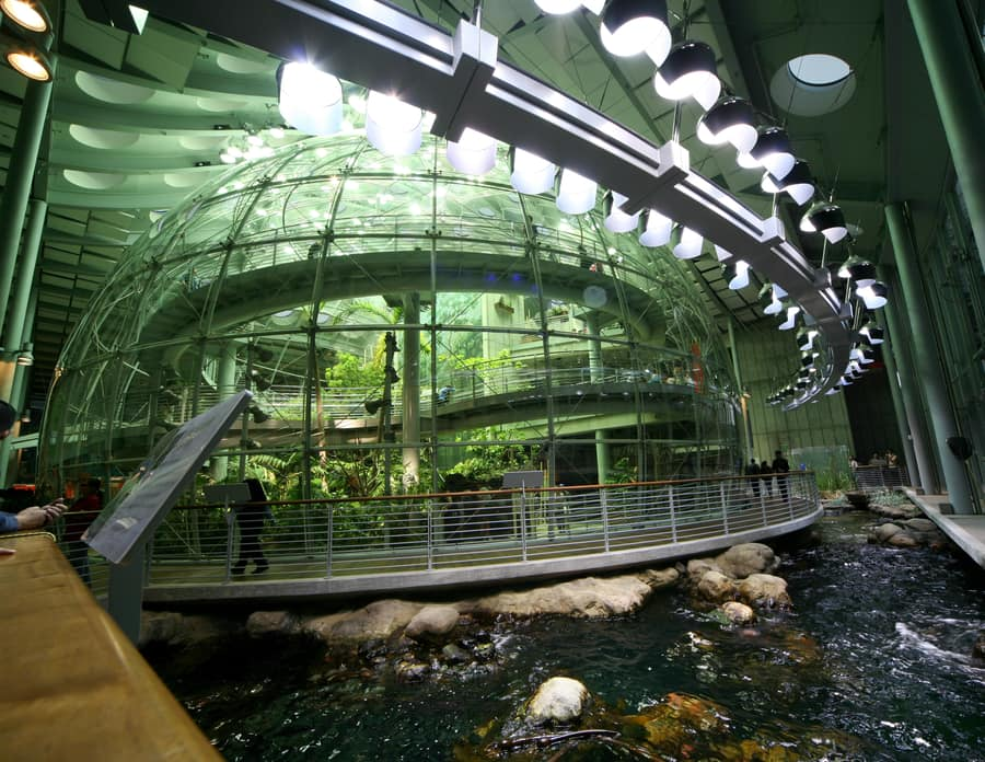 California Academy of Sciences, a visit to do in SF